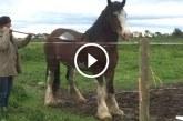 A gazdi megvakarja a  lombseprűvel lova hátát – Figyeld, hogy reagál rá