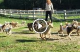 A kecskegidák futása – Ennél aranyosabbat ma nem fogsz látni