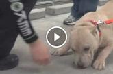 A kutyus nem hitte el, hogy végre örökbe fogadták – Figyeld milyen önfeledt boldogan reagál