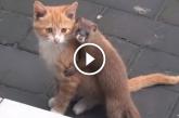 Cica legjobb barátja egy vadászgörény! Nagyon aranyos páros!
