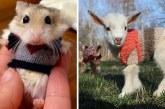 25 cuki állat, aki felkészült a hidegre