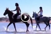 Galoppozás a tengerparton – Csodaszép felvételek