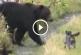 Kiskutya üldözi el a hatalmas betolakodó grizzly medvét – Eszméletlen felvétel