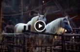 Szenzációs videó: ezért haltak ki az unikornisok