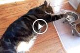 Így isznak a világ leglustább macskái – Nagyon jó válogatás