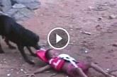 Állatok, akik megmentették az emberek életét – Hihetetlen felvételek!