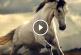 Az ember legősibb és leghűségesebb háziállata a ló – Gyönyörű zenés képsorozat