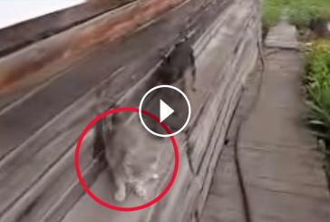Gazdi megkéri kutyáját, hogy vigye be a macskát a házba- Hihetetlen ami utána történik!