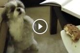 Kis kutyus könyörög, hogy kaphasson a gazdi kajájából – Ez nagyon cuki, nézd meg!