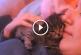 Kiscica odabújik a gazdi fejéhez – A nap legaranyosabb videója