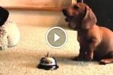 Kutyák csengővel jeleznek a gazdinak, hogy ki kell menniük – Nézd, milyen ügyesek!