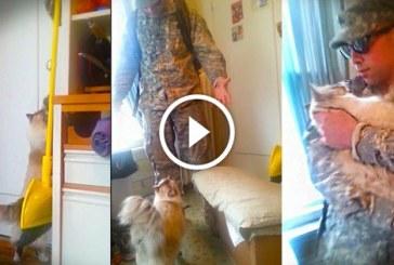 Macska reakciója rég nem látott gazdája hazaérkezésekor – Ez nagyon aranyos