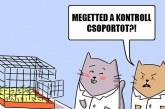 Tudós macsekok