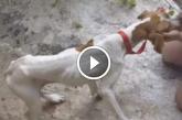 15 méteres szakadékban hagyott kutya meglátja a megmentőit. A reakciója nagyon megható!