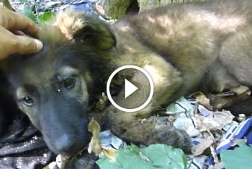 3 hónapos kiskutyát magára hagyták az erődben. De ezután olyan történt, ami teljesen megváltoztatta az életét!