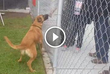 A menhelyi kutyus felismerte régi családját, azonban ők nem érte jöttek
