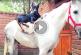 Dobermann kutyus legjobb barátja egy fefér ló – Imádnivaló felvétel