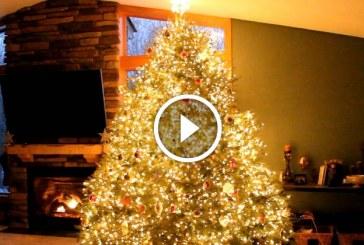 Első ránézésre ez egy átlagos Karácsonyfa, de várd meg míg elindul a zene