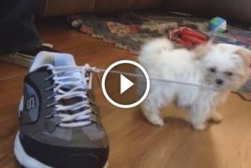 A legviccesebb kutyusos jelenetek. Nem bírod ki nevetés nélkül!