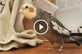 Papagáj egy népszerű film főcímdalát énekli. Ez hatalmas! Te felismered?