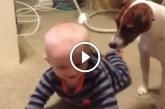 A család kutyája megmutatja a kisbabának hogyan kell kúszni