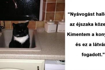 20 vicces macskás fotó olyan emberektől, akinek nincs is macskája |