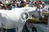 A ló elvesztette gazdáját, amit a temetésén csinált arra senki nem számított