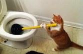 A legnépszerűbb macskás jelenetek egy videóban