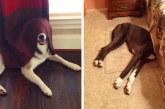 20 kutyus, akik azt hiszik, hogy ők a bújócskázás bajnokai