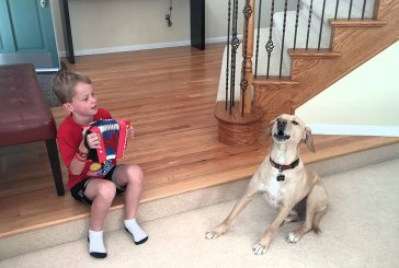 A kis gazdi és a kutyus harmonikás duója biztos, hogy szebbé teszi a napod